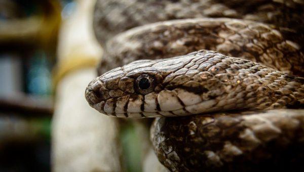 Een slang als huisdier